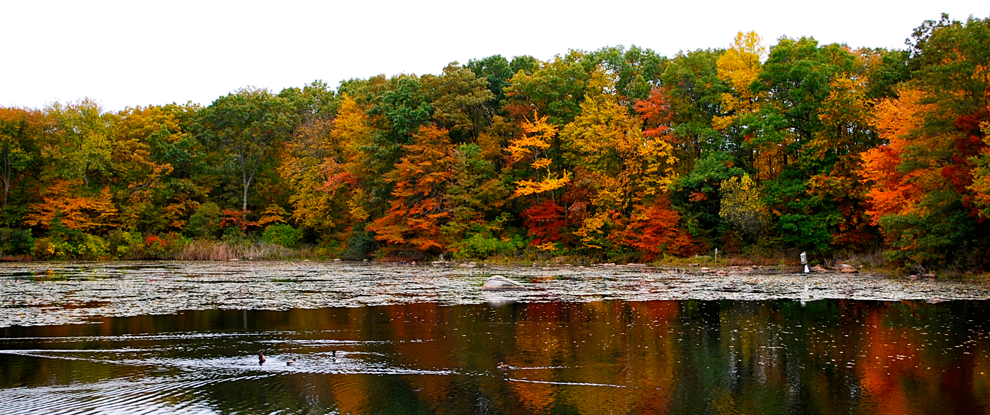 Fall Colors by Shannon Brady Web